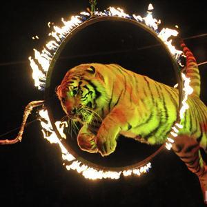 Цирки Чалтыря