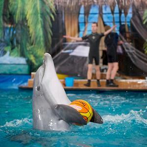 Дельфинарии, океанариумы Чалтыря