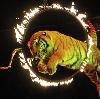 Цирки в Чалтыре