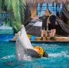 Дельфинарии, океанариумы в Чалтыре