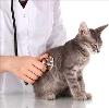 Ветеринарные клиники в Чалтыре